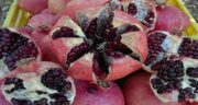 انار و سرماخوردگی ؛ خاصیت آنتی اکسیدان انار خطر ابتلا به بیماری ویروسی را کم می کند