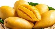 انبه دیابت ؛ قند طبیعی موجود در انبه مفید برای افراد دیابتی