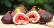 انجیر در شیردهی ؛ تاثیر خوردن میوه انجیر برای طعم شیر مادر