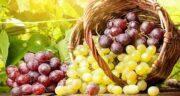 انگور برای معده ؛ درمان ناراحتی و التهاب معده با خوردن انگور