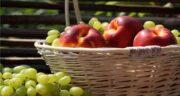 انگور و ماهی ؛ مصرف همزمان انگور با ماهی چه مضرات و خواصی برای بدن دارد