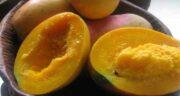ایا انبه مسهل است ؛ خواص و مضرات میوه انبه برای دستگاه گوارشی