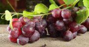 با رژیم انگور چند کیلو کم میکنید ؛ با خوردن انگور در یک ماه چقدر لاغر می شویم