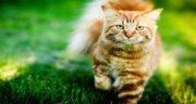 برگ بو برای گربه ؛ مواظب باشید گربه تان برگ بو نخورد