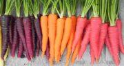 خواص آب هویج برای پوست ؛ تاثیر آن بر جوانسازی و از بین رفتن چروک های پوست