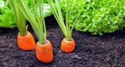 خواص آب هویج در درمان اسهال ؛ بهبود اسهال و هضم راحت غذا