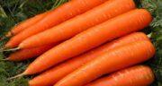 خواص آب هویج ناشتا برای کبد ؛ درمان کبد چرب و جلوگیری از اضافه وزن