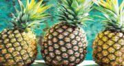 خواص آناناس در لاغری ؛ فیبر موجود در آناناس باعث احساس سیری می شود
