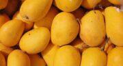 خواص انبه در سرماخوردگی ؛ درمان سرماخوردگی با خوردن میوه انبه