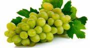 خواص انگور در بدنسازی ؛ خواص آنتی اکسیدان انگور برای افزایش حجم عضلات