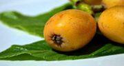 خواص برگ ازگیل در طب سنتی