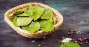 خواص برگ بو در آشپزی ؛ ادویه ای پر خاصیت برای استفاده در آشپزی