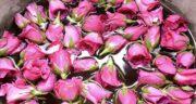 خواص درمانی گلاب در طب سنتی ؛ خاصیت باورنکردنی گلاب از نظر طب سنتی