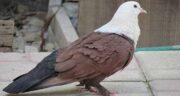 خواص زردچوبه برای کبوتر ؛ خواص و فواید گیاه زردچوبه برای پرندگان