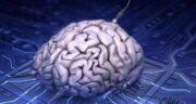 خواص موز برای مغز ؛ فواید خوردن موز برای تقویت و سلامت مغز