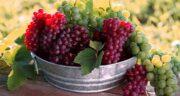 خوردن انگور برای صبحانه ؛ فواید خوردن انگور در وعده صبحانه برای سلامتی