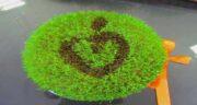 سبزه خاکشیر ؛ برای عید نوروز با خاکشیر سبزه هفت سین بکارید