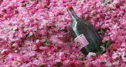 ضرر گلاب ؛ نکاتی مهم درباره موارد منع مصرف و مضرات گلاب