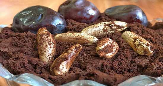عوارض قهوه خرما ؛ اطلاعاتی کامل در مورد مضرات قهوه خرما