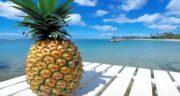 فصل آناناس کی است ؛ زمان برداشت میوه آناناس چه فصلی هست؟