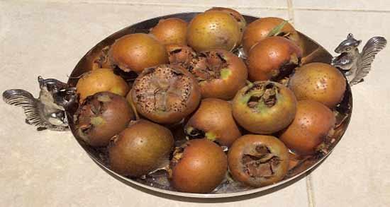 فواید ازگیل شمال ؛ میوه ازگیلی که در شمال کشور پرورش می یابد چه خاصیتی دارد