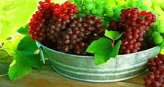 فواید انگور یاقوتی ؛ آشنایی با خواص انگور یاقوتی برای سلامتی