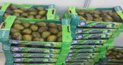 قیمت میوه آووکادو در اصفهان ؛ اطلاع از قیمت میوه آووکادو در بازار اصفهان
