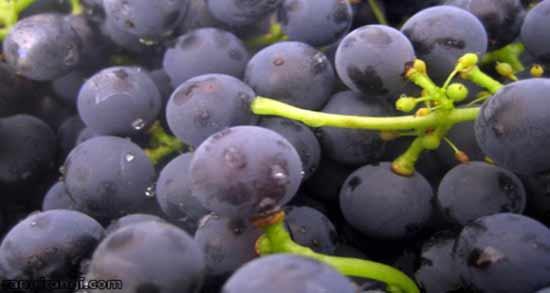 مضرات انگور برای سرماخوردگی ؛ عوارض خوردن انگور تازه برای سرماخوردگی