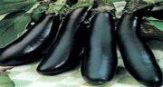 مضرات بادمجان برای معده ؛ هضم آسان و درمان زخم معده