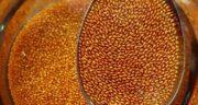 مضرات خاکشیر ؛ عوارض مصرف خاکشیر برای کبد چرب و معده درد