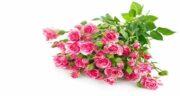 مضرات گلاب برای صورت ؛ استفاده از گلاب چه ضرری برای پوست دارد