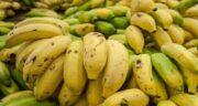 موز در قرآن ؛ آیا نام میوه موز در قرآن کریم آمده است؟