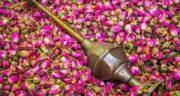 نحوه مصرف گلاب ؛ می دانید گلاب را چگونه باید مصرف کرد تا خواص بیشتری داشته باشد