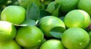 نگهداری آب لیمو ترش ؛ طرز صحیح نگهداری و مکان مناسب آن