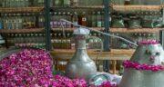 گلاب دو آتیشه چیست ؛ آیا می دانید منظور از گلاب دو آتیشه چیست