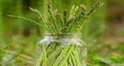 گیاه مارچوبه ؛ آشنایی با خواص و عوارض مصرف گیاه مارچوبه
