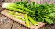 مضرات کرفس در طب سنتی ؛ یک وعده غذای کرفس دار بوی بد دهان را از بین می برد