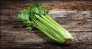 خواص کرفس پخته ؛ همچنین تقویت حافظه و درمان میگرن با خوردن گیاه کرفس
