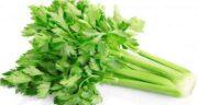 فواید کرفس کوهی ؛ مهمترین خواص کرفس کوهی، خاصیت آرامبخشی این گیاه است