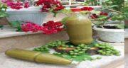 مضرات آبغوره برای کلیه ؛ راههای سنتی برای درمان سنگ کلیه