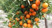 تعبیر خواب آب نارنج ، معنی دیدن آب نارنج در خواب های ما چیست