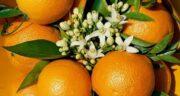 تعبیر خواب بهار نارنج ، معنی دیدن بهار نارنج در خواب های ما چیست