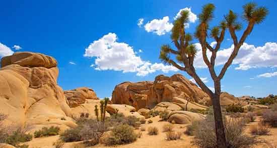 تعبیر خواب به صحرا رفتن ، معنی به صحرا رفتن در خواب های ما چیست