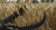 تعبیر خواب داس کشاورزی ، معنی دیدن داس کشاورزی در خواب های ما چیست