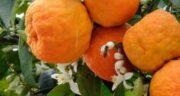 تعبیر خواب نارنج خراب ، معنی دیدن نارنج خراب در خواب های ما چیست