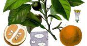 تعبیر خواب نارنج خوردن ، معنی نارنج خوردن در خواب های ما چیست