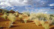 تعبیر خواب صحرا بودن ، معنی صحرا بودن در خواب های ما چیست