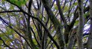 تعبیر خواب شاخه درخت شکسته ، معنی دیدن شاخه درخت شکسته در خواب