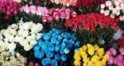 تعبیر خواب شاخه گل رز آبی ، معنی دیدن شاخه گل رز آبی در خواب چیست