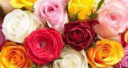 تعبیر خواب شاخه گل رز سفید ، معنی دیدن شاخه گل رز سفید در خواب چیست